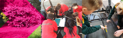 Pushcart teams involved in the Energy Breakthrough